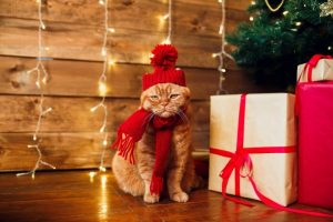 UBC happiness expert gives tips for a more joyous holiday