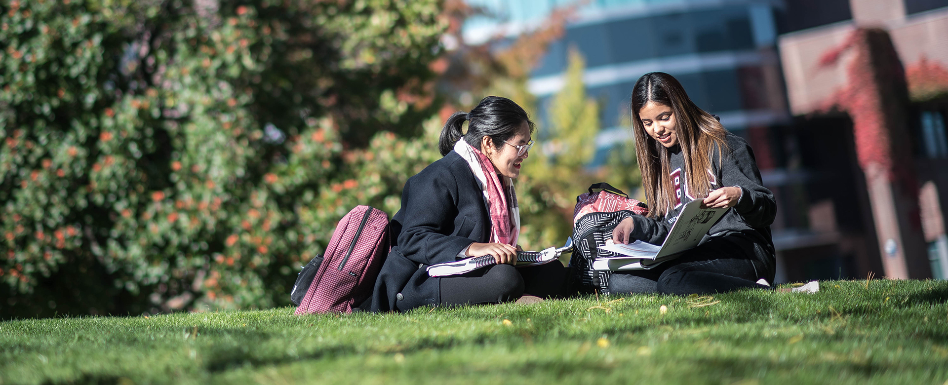 University students studying outdoors